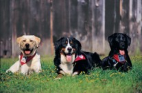 MIRA Guide Dogs